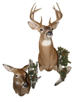 BuckDoe Mount