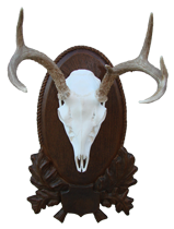 Coues Euro Mount